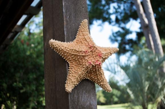 starfish-1630025