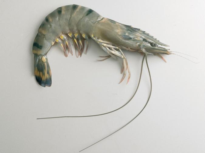 shrimp-1-1322941-1599x1199