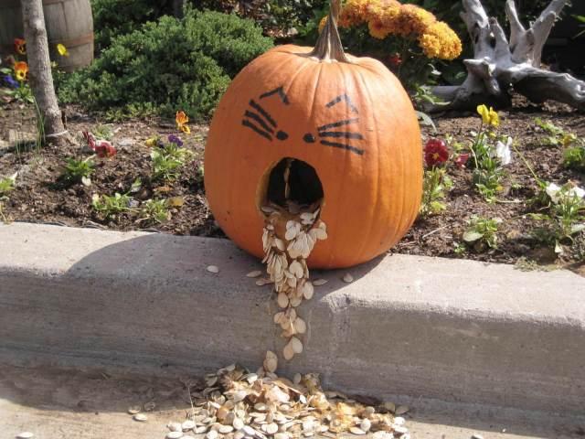 puking-pumpkin-1-1320521-1600x1200