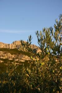 olive-tree-1327733-1600x2400
